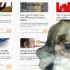 If You Do Not Update the Content On Your Website - You Hate Puppies